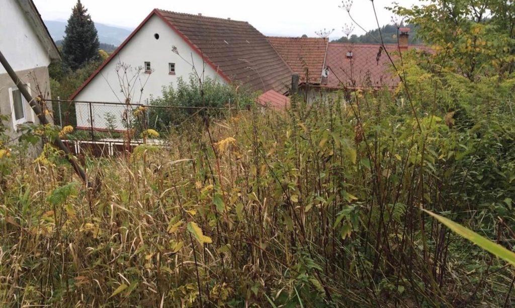 Kávoši - Nikola - pěstování - rekultivace zahrady