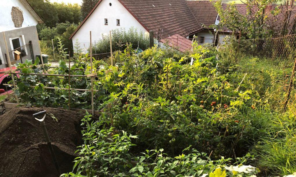 Kávoši - Nikola - pěstování - rekultivace zahrady - léto